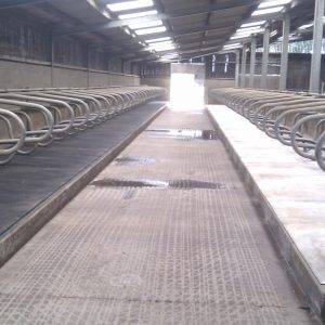 Cattle Shed Cleaning